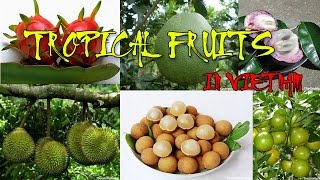 Top 10 tropical fruit in vietnam! VERY GOOD! - HEALTH FOR YOU