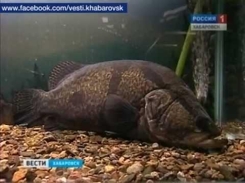 Фото речной рыбы под водой счет того