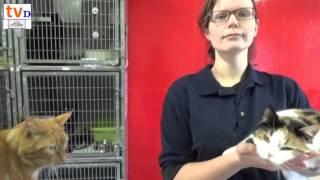 Praatje over de verdwaalde katten en honden in de gemeente Dalfsen
