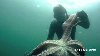Freediving for 10 inch Abalone
