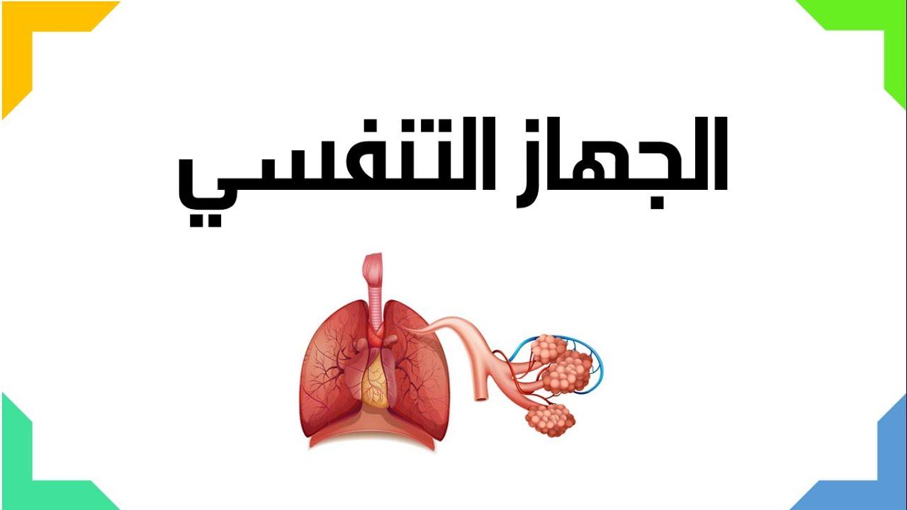 الجهاز التنفسي العلوم والحياة الصف التاسع الأساسي المنهاج الفلسطيني Youtube