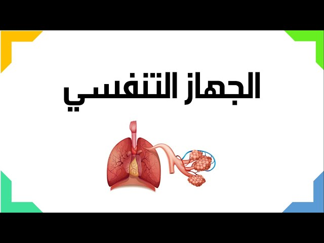 الجهاز التنفسي - العلوم والحياة - الصف التاسع الأساسي - المنهاج الفلسطيني
