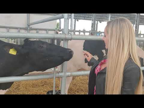 Intelligent Technology Modern Cow Calf Transportation Automatic Milking Pretty Girl in Smart Cowshed