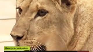 Братья Запашные судятся с зоозащитной организацией