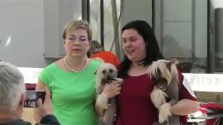 Китайскай хохлатая собака. Выставка собак. Одесса. CAC-UA. Черное море. Одесская весна. VLOG DOG.