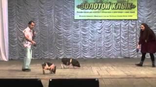 Театр Три Поросёнка, Ксения Ремизова
