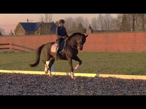 Grand Prix prospect gelding by Vivaldi-Metal