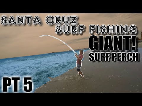 SANTA CRUZ SURF FISHING 3 POUND BARRED PERCH