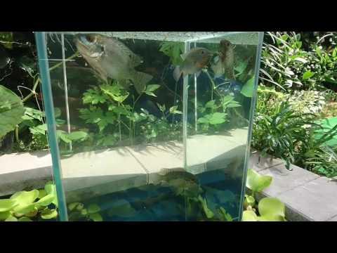 DIY Floating Aquarium Pond