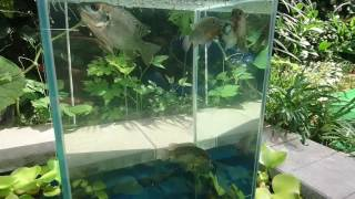 DIY Floating Aquarium pond