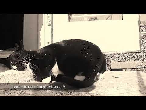 Animal Brake dance