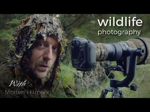 Red Deer - Wildlife Photography | behind the scenes video wi