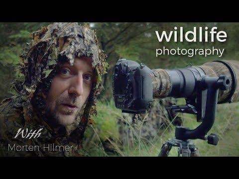 Red Deer - Wildlife Photography   behind the scenes vlog with wildlife photographer Morten Hilmer