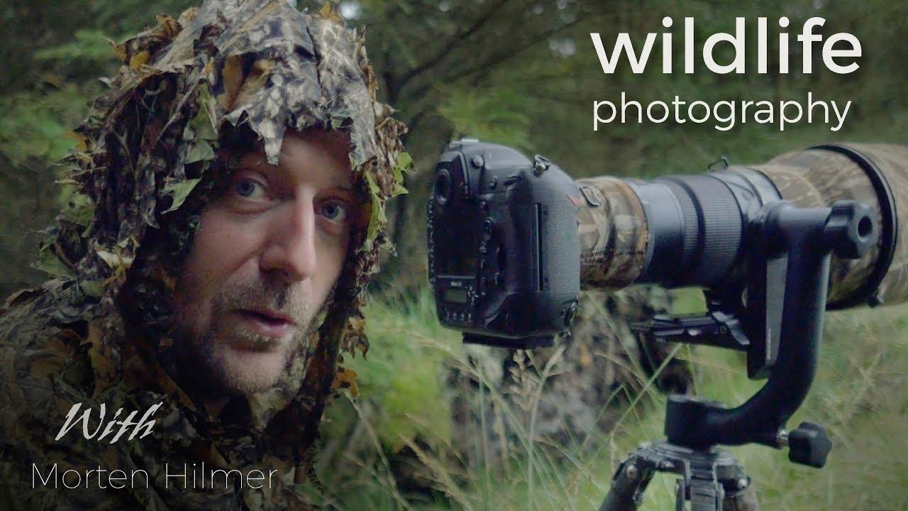 RED DEER - WILDLIFE PHOTOGRAPHY - behind the scenes vlog with wildlife photographer Morten Hilmer image