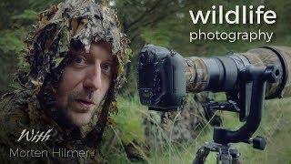 RED DEER - WILDLIFE PHOTOGRAPHY - behind the scenes vlog with wildlife photographer Morten Hilmer
