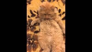 Секс по телефону с котэ!