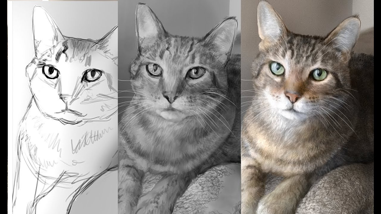 Hyper Realism Digitally Painting A Cat In Photoshop Youtube