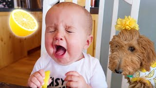 BABY & PUPPY React To Lemons For The First Time!