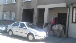 Koń w Bochni