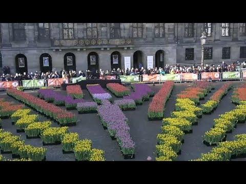 شاهد: أمستردام تكتسي بأبهى حلة في اليوم الوطني للتوليب  - نشر قبل 13 ساعة