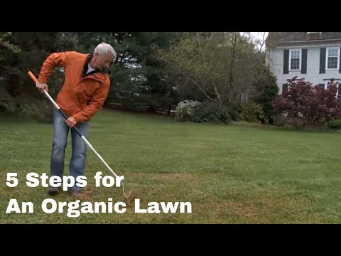 How to get an Organic Lawn in Five Steps