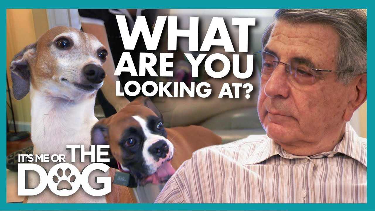 Can a Truce be Formed Between Dog and Grandpa? | It's Me or The Dog