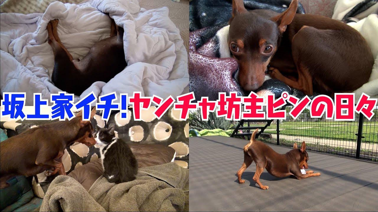 【18兄弟で一番ヤンチャ!】11男坊・内田ピンはどんな日々を過ごしている?意外な一面も明らかに!