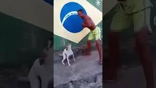 В Бразилии даже собаки танцуют румбу