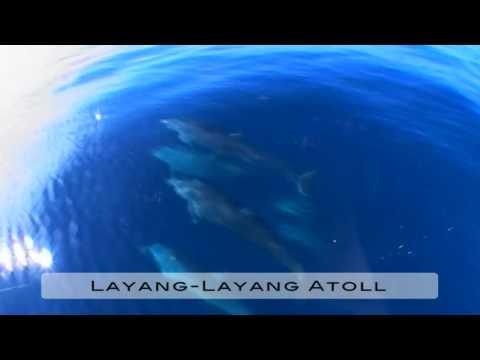 www.scubadealsonline.com - LAYANG-LAYANG ATOLL - Sabah - Malaysia