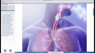 A professor uses Anatomy & Physiology to teach the Respiratory System
