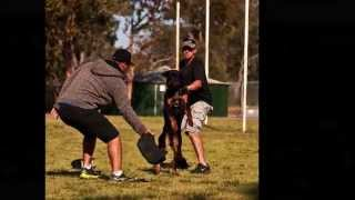 Von Forell K9 Training Seminar, Perth 2012