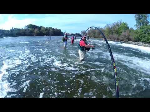 Salmon Fishing Oswego NY 2017