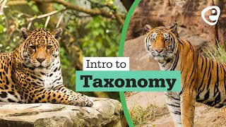 An introduction to: Taxonomy