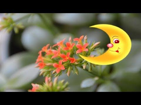 Работаем с растениями по лунному календарю. Вы согласны?