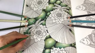 Water Lilies - Part 1: Pebbles Drawing | Daydreams Coloring Book