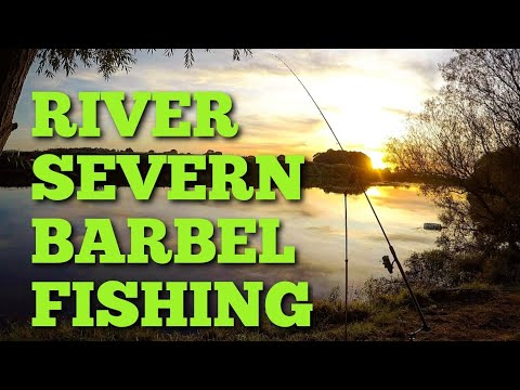 RIVER SEVERN BARBEL FISHING - SIMPLE RIG AND BAIT