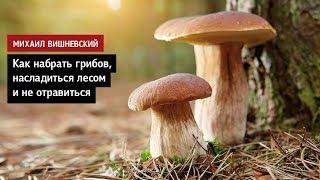 михаил Вишневский: Как набрать грибов, насладиться лесом и не отравиться