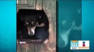 Perro salvó a un gatito de morir congelado en la nieve | Noticias con Francisco Zea