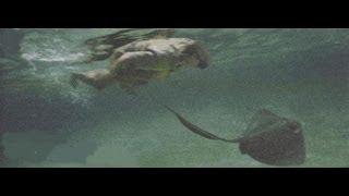Así murió Steve Irwin's, el cazador de cocodrilos en 2006 thumbnail