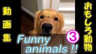 オススメ動画一覧※】 □ 笑っちゃうおもしろ可愛い動物ハプニングムービ...