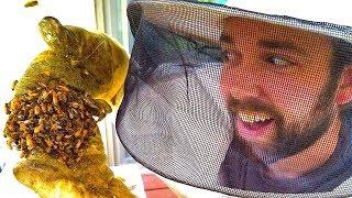 WE GOT BEES!