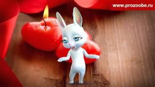 Поздравление на Валентинов день ✵✵✵ Любви вам безграничной ✵✵✵ Поздравления от Зайки