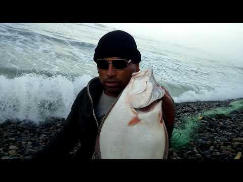 Pesca De  Lenguados.