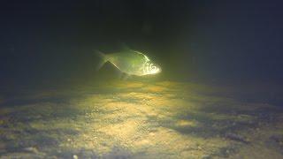 Зимняя рыбалка ночью, Подводное видео подо льдом(Подводные съемки ночью подо льдом. Подводная камера на на зимней рыбалке ночью. Подводный мир зимой в Подмо..., 2015-03-01T07:02:40.000Z)