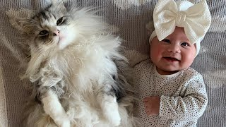 Cat Protects Baby Best Friends Forever (Cutest Video Ever!!)