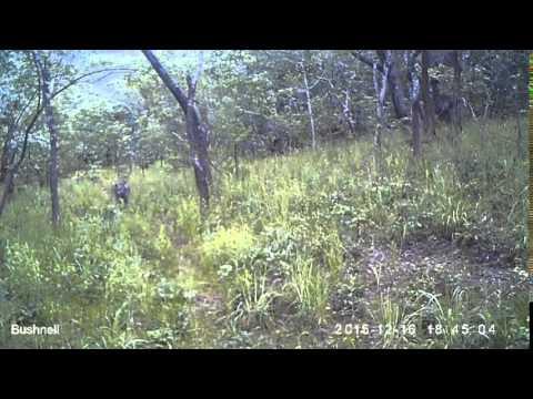 Hyenas in the Issa Valley, Tanzania...a 2nd sighting! (credit: UPP/MPI EVA)
