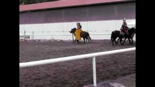 Kadryl Amber Horse   Otwarte Ogrody czerwiec 2012