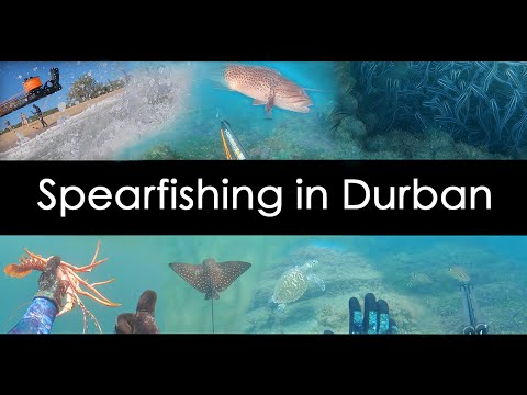 Spearfishing In Durban, KZN, Beautiful Reefs, Turtles, Crays, Rays And Fish!