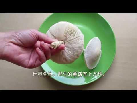 学习鉴别野蘑菇  Wild Mushroom ID