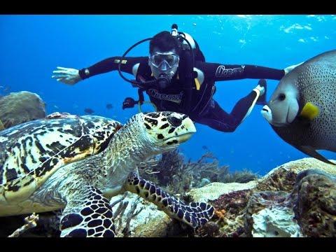 Scuba Diving In Andaman And Nicobar Islands INDIA
